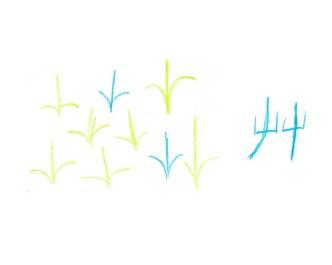 chinese-艸-grass