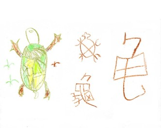 chinese-龟-turtle