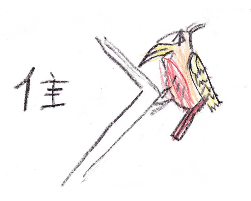 chinese word for short tail bird